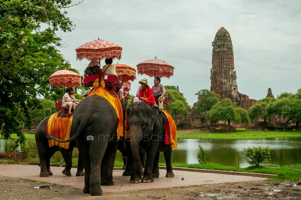Elephants at Wat Phra Ram