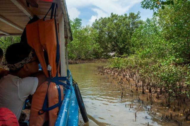 River cruise along the mangrove reserve of Brgy. San Roque, Nueva Valencia, Guimaras.