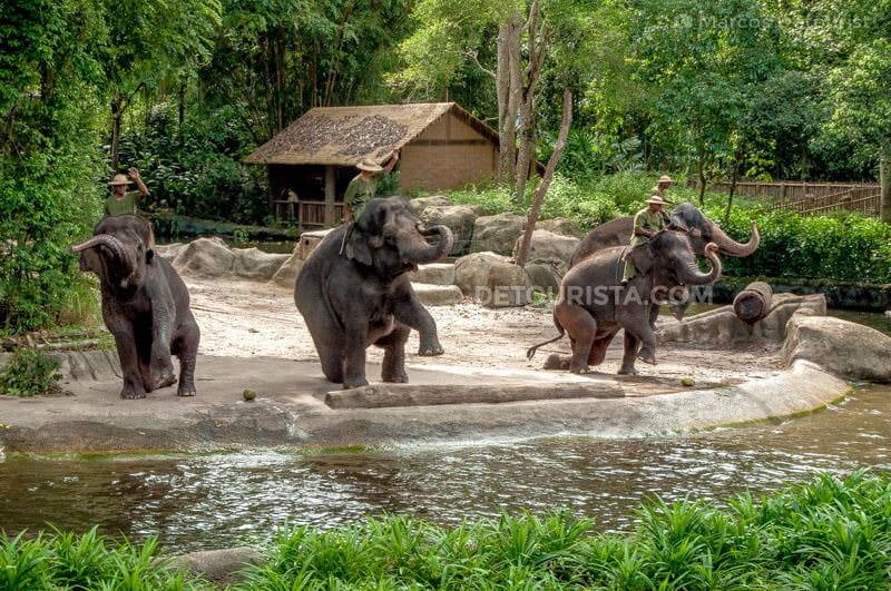 Singapore Zoo Elephant Show
