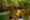 Bamboo River Raft Cruise at the Bugang River in Pandan, Antique.