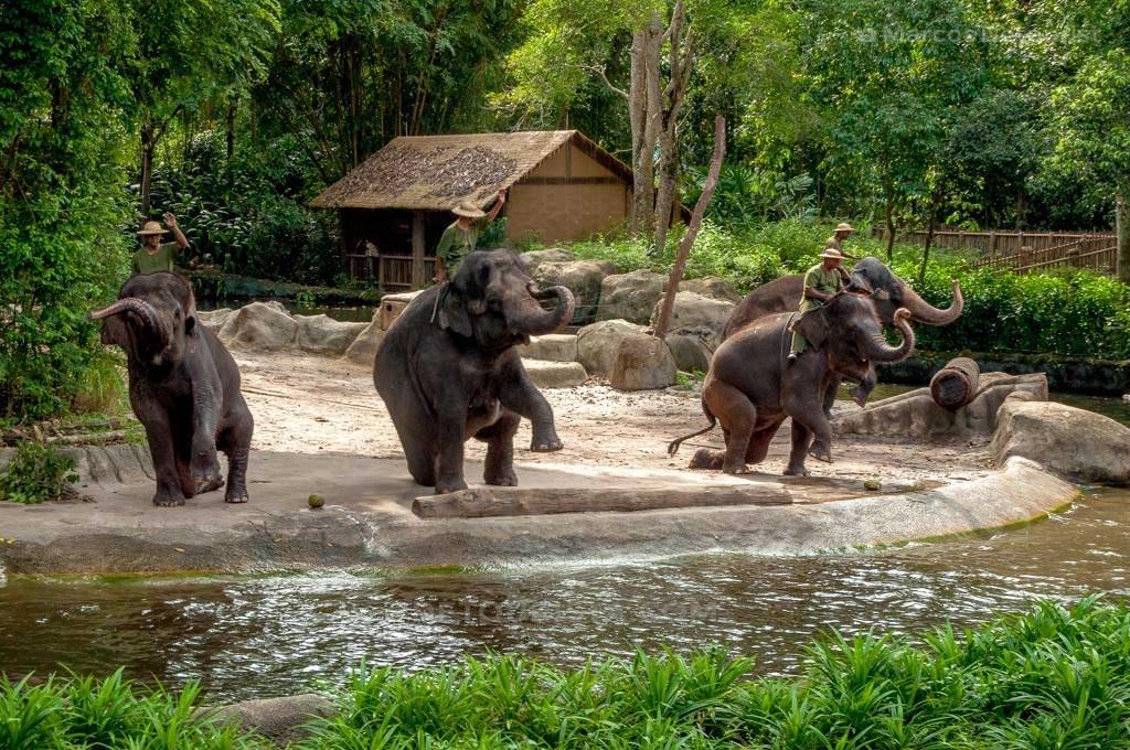Elephant Show at Singapore Zoo, Singapore