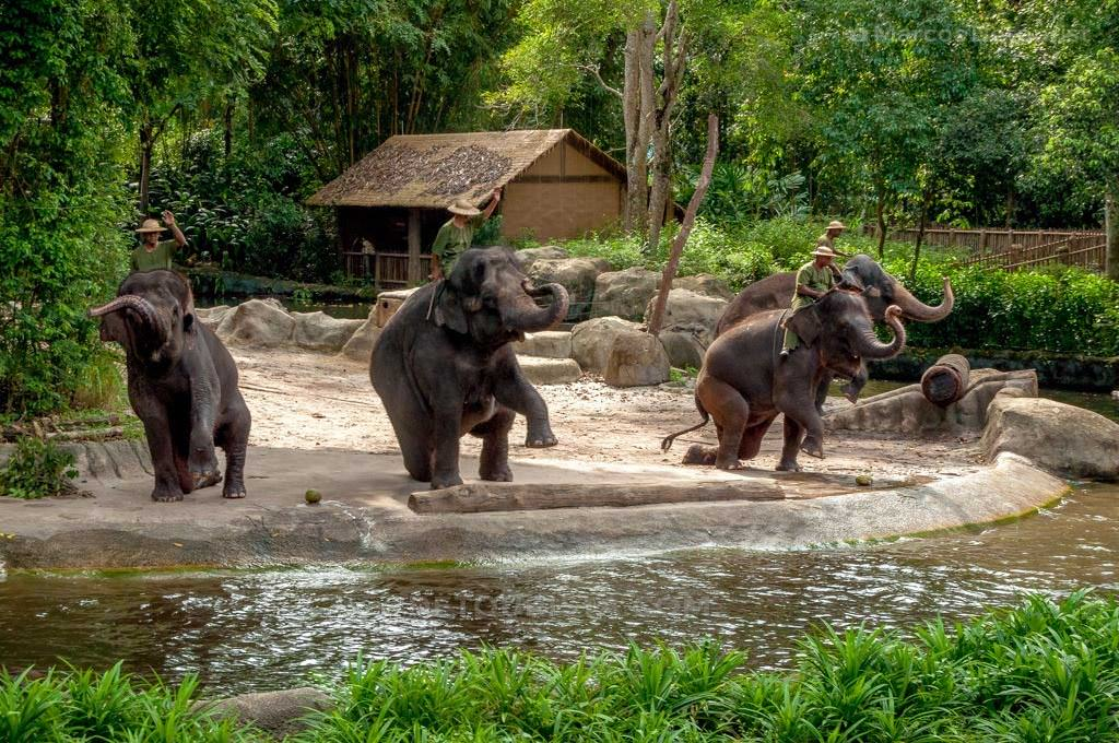 Elephant Show at Singapore Zoo, Singapore
