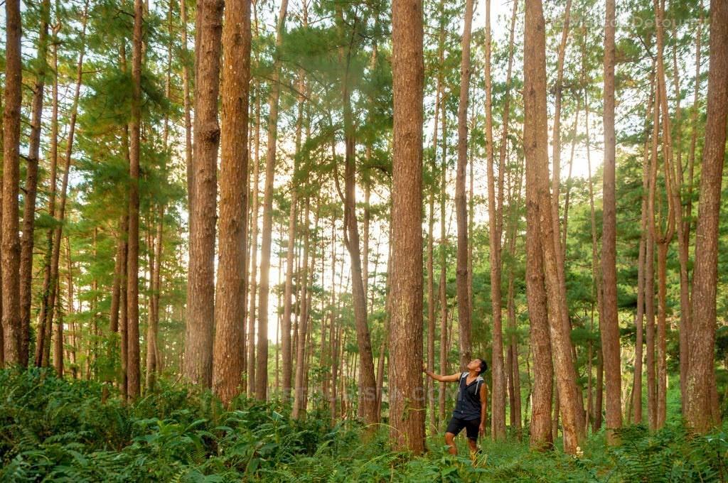 Tabionan Pine Forest, Bucari, Leon, Iloilo, Philippines