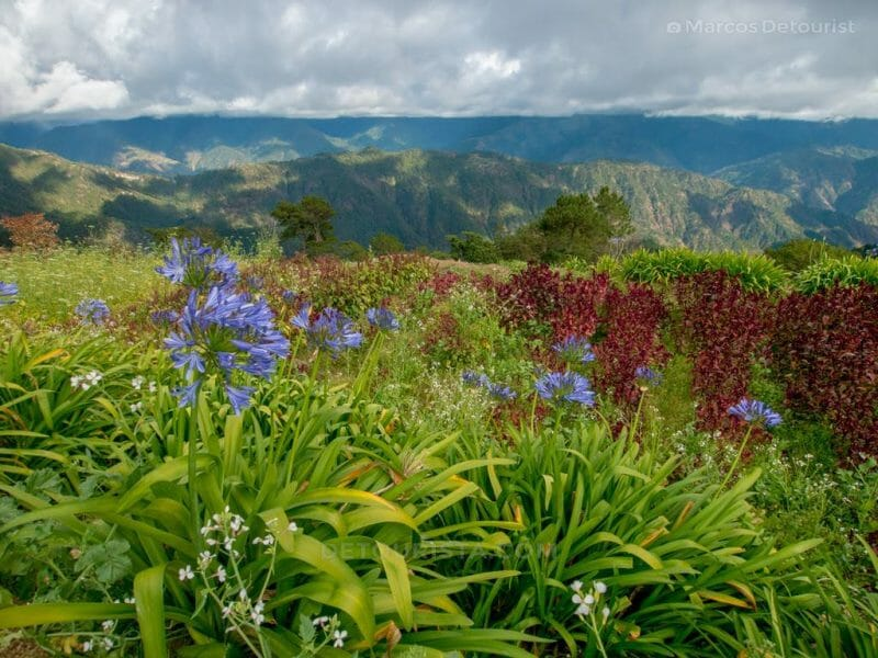 Flower Farm at Atok, Benguet, Philippines