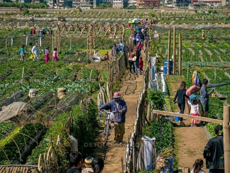 Starberry Farm at La Trinidad, Benguet, Philippines