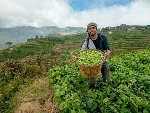 Vegetable Terraces at Buguis, Benguet, Philippines