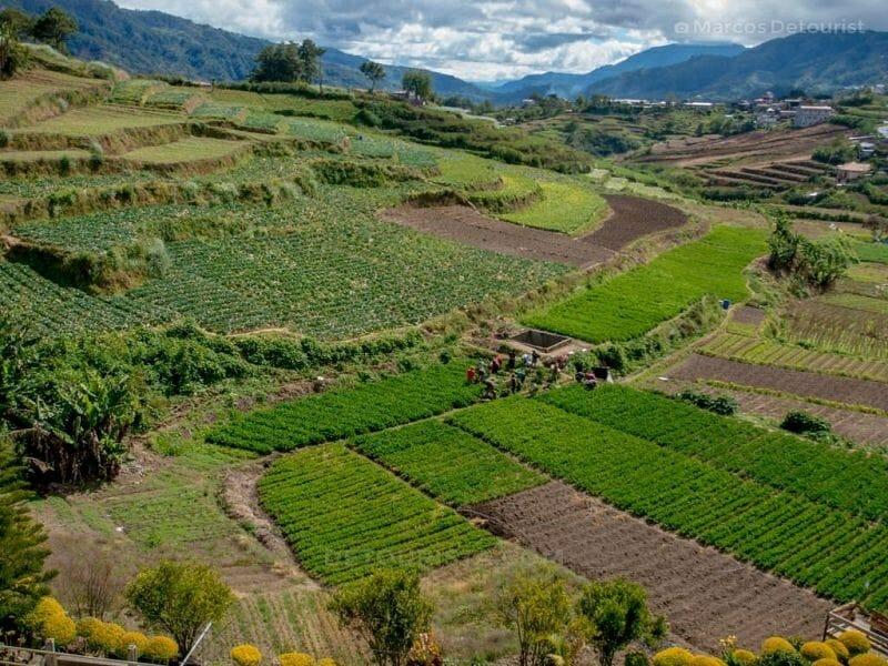 Vegetable Terraces at Buguis, Benguet, Philippines