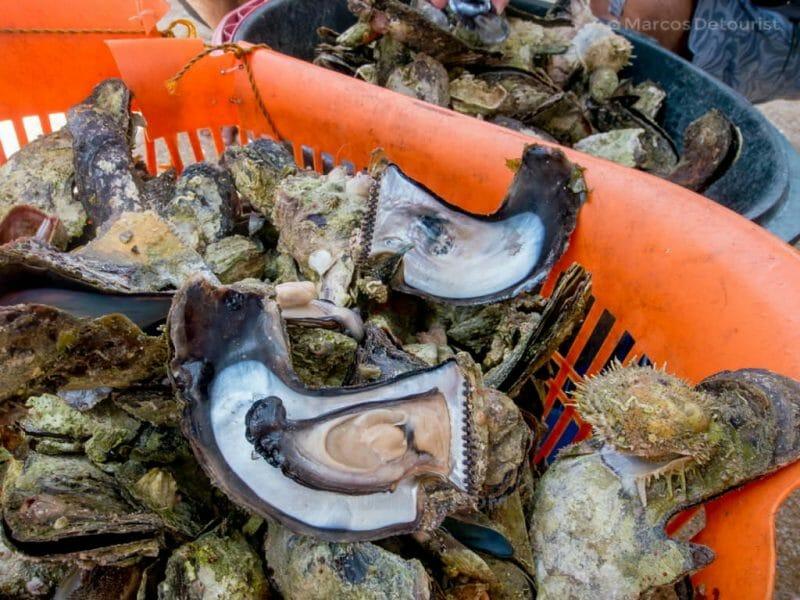 Wasay-wasay shell at Antonia Beach, Gigantes Sur Island, Carles, Iloilo, Philippines