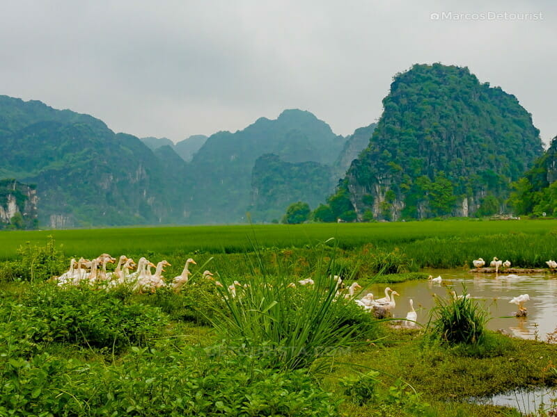 Glipmse of the beautiful countryside as I started my bike tour around Ninh Binh, in Vietnam, on September 2015