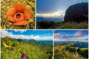 Mount Napulak summit trek and blooming Rafflesia in Igbaras, Iloilo