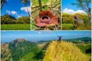 Mount Taripis knife-egde summit, rafflesia & Igcabugao underground river