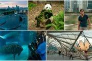 Singapore 2013 Detours Highlights