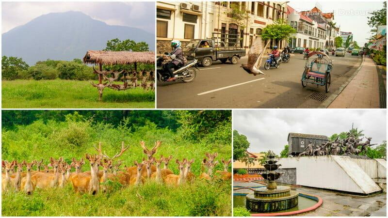 East Java 5-Day Highlights — Baluran, Surabaya & Bondowoso