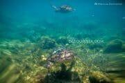 Negros Oriental 4-Day Highlights – Apo Island, Dumaguete, Casarororo Falls