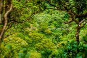 Mount Madia-as Summit Climb 3-Day Highlights