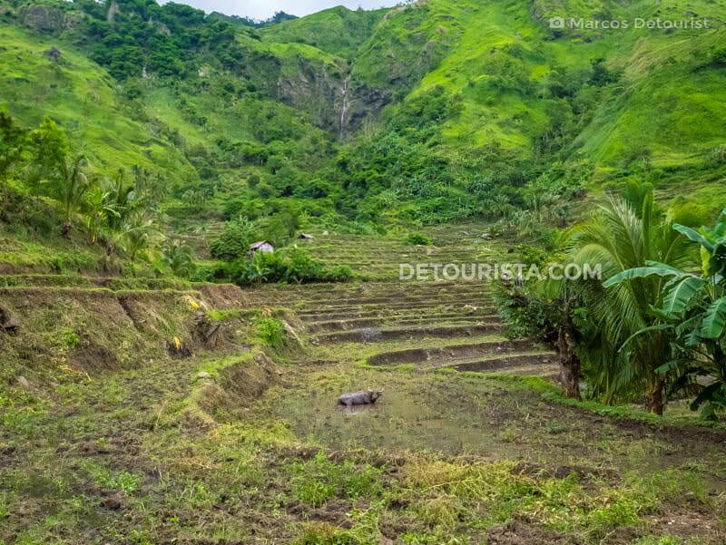 Trek to Antique Rice Terraces, in Brgy. General Fullon, San Remigio, Antique, Philippines