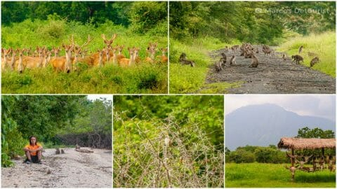 Baluran National Park — Bekol Savannah, Bama Beach & Wildlife Encounters