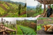 Ngadas Village Walk & Homestay near Mount Bromo