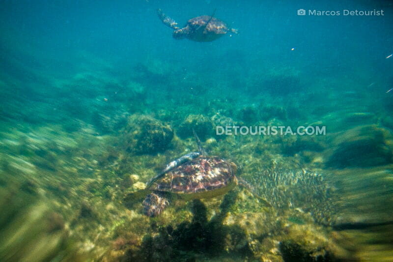 Swimming with sea turtles at Apo Island in Dauin, Oriental Negros, Philippines