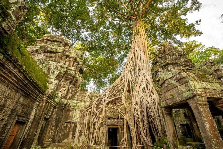 Ta Prohm (temple)