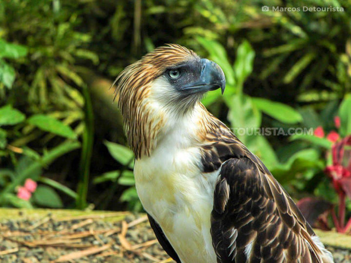 077-Philippine-Eagle-Center-Davao-161023-143539-1200x900