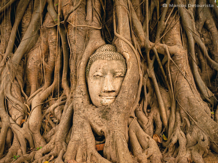 Buddha head covered by roots at Wat Maha That in Ayutthaya, Thailand