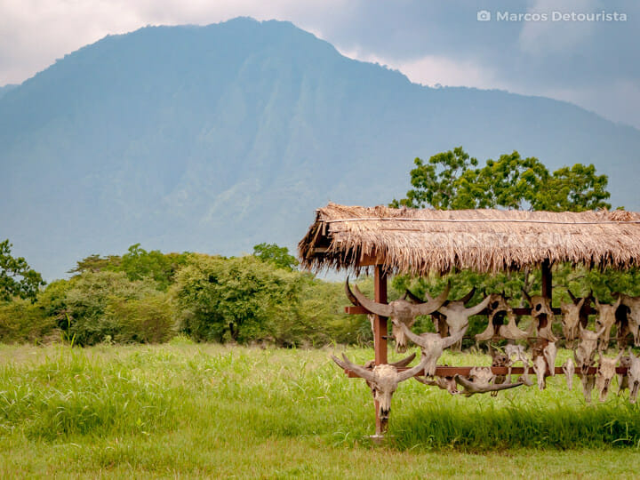 Baluran National Park, East Java