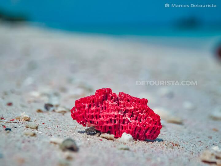 Santa Cruz Island red coral