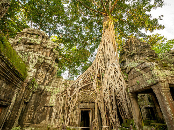 Ta Prohm (temple), in Angkor, Siem Reap, Cambodia