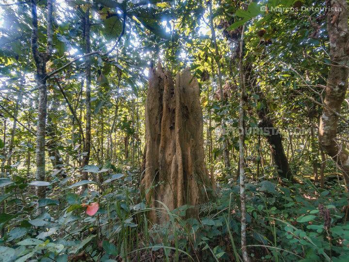 Chitwan Jungle Safari - Termite Mound