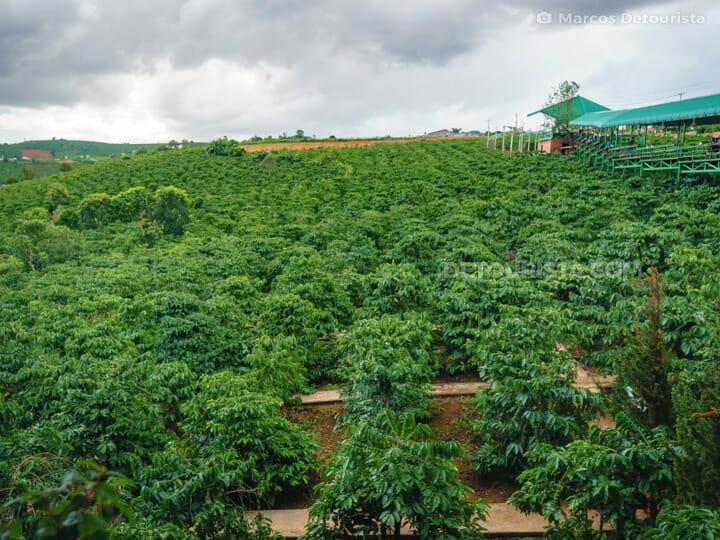 Da Lat Coffee Farm