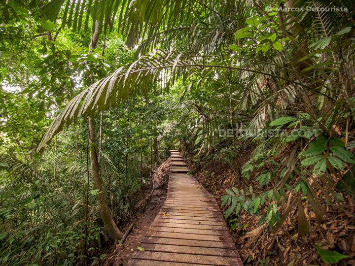 Jungle Trekking, Pahang Taman Negara