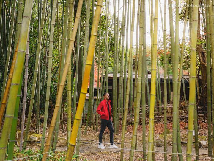 Marcos at Arashiyama Bamboo Forest, Kyoto