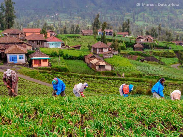 Cemoro Lawang Village, Mount Bromo