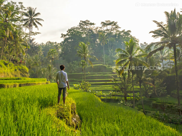 Marcos at Ubud - Tegalalang Rice Terraces