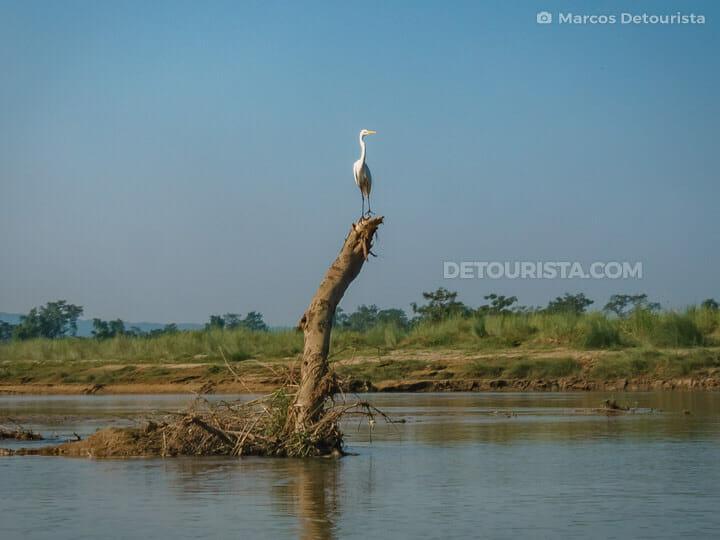 Rapti River Cruise, Chitwan