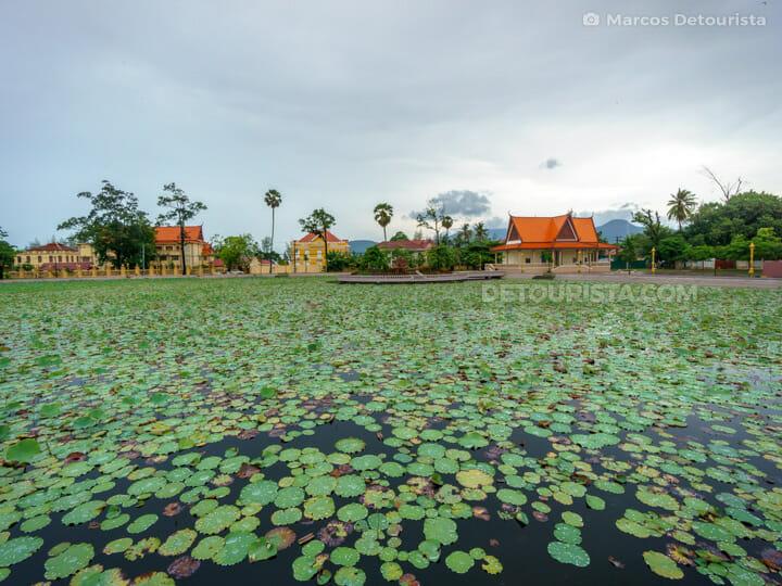 Kampot Lotus Pond