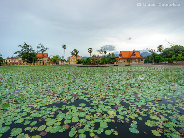 Kampot Lotus Pond, Cambodia