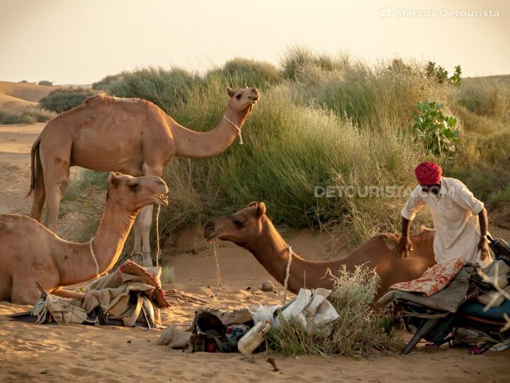 Thar Desert Safari
