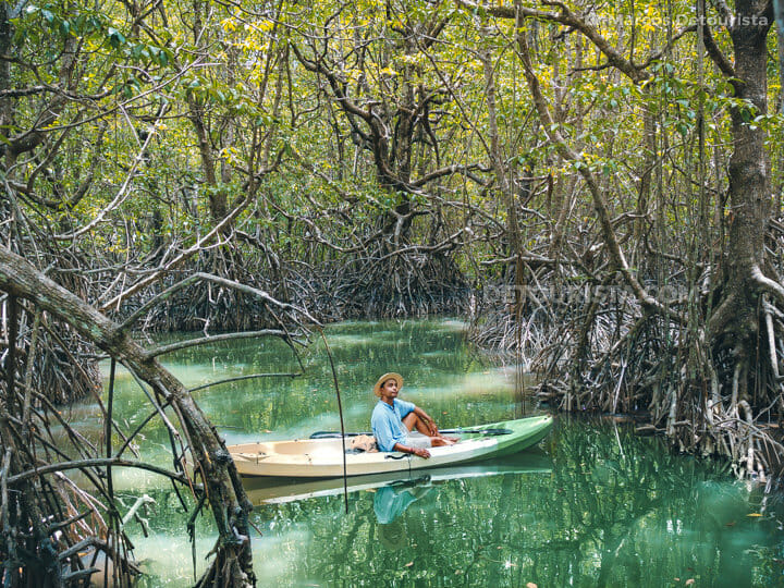 San Vicente Mangrove Forest in San Vicente, Palawan, Philippines