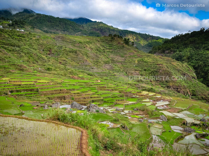 Aguid Rice Terraces  in Sagada, Mountain Province, Philippines