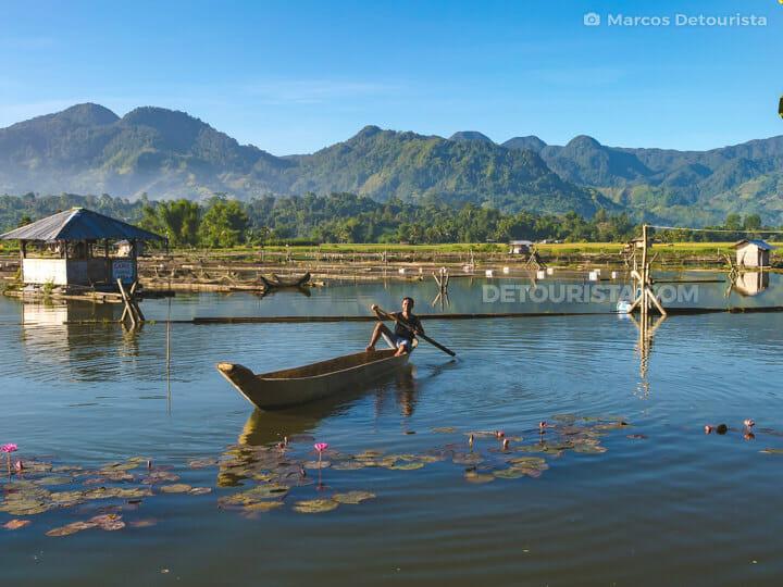 Lake Seloton lily fields, Lake Sebu