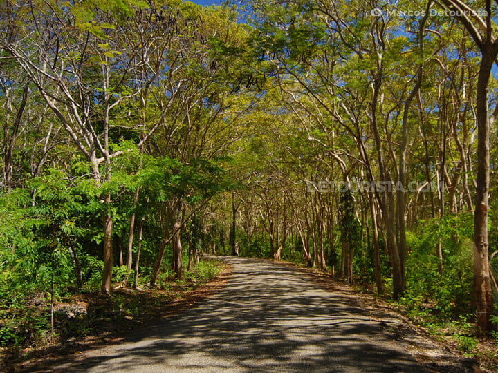 Salagdoong Forest in Siquijor, Philippine