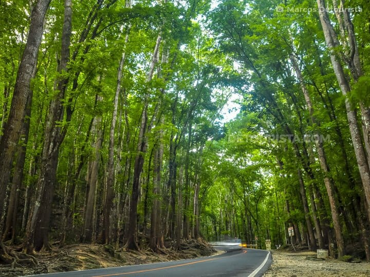 Bilar Man-Made Forest in Bohol, Philippines