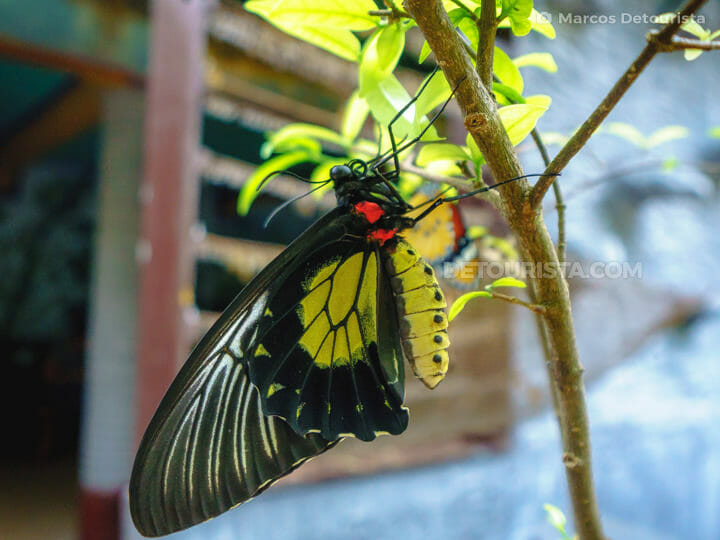 Butterfly Farm and Palawan Tribal Village in Puerto Princesa Cit