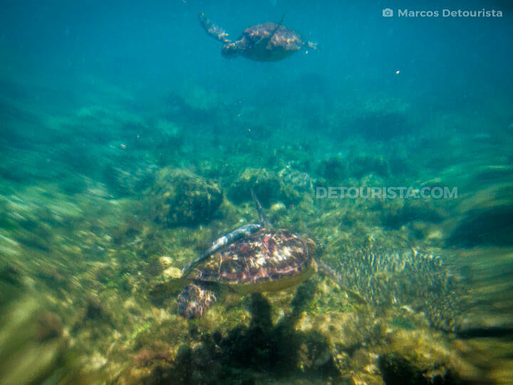 Swimming with sea turtles at Apo Island,  in Dauin, Oriental Neg