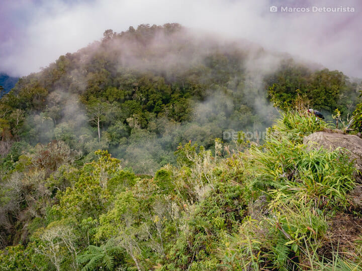 Lake Holon - Kule Trail forest view