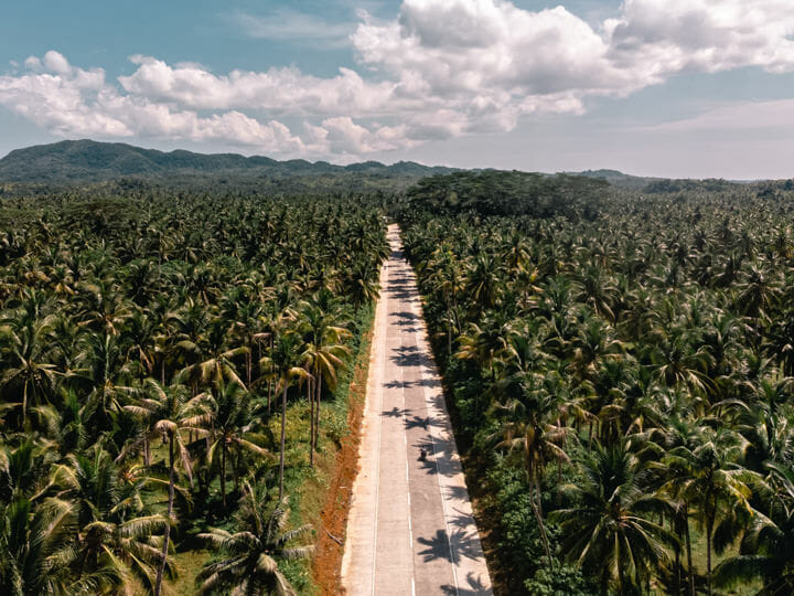 Palm Tree Road, in Siargao, Philippines