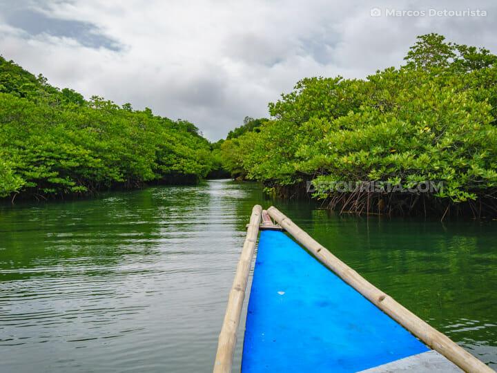 Taklong Island National Marine Reserve mangrove forest
