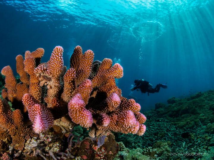 Manado - Bunaken Marine Park